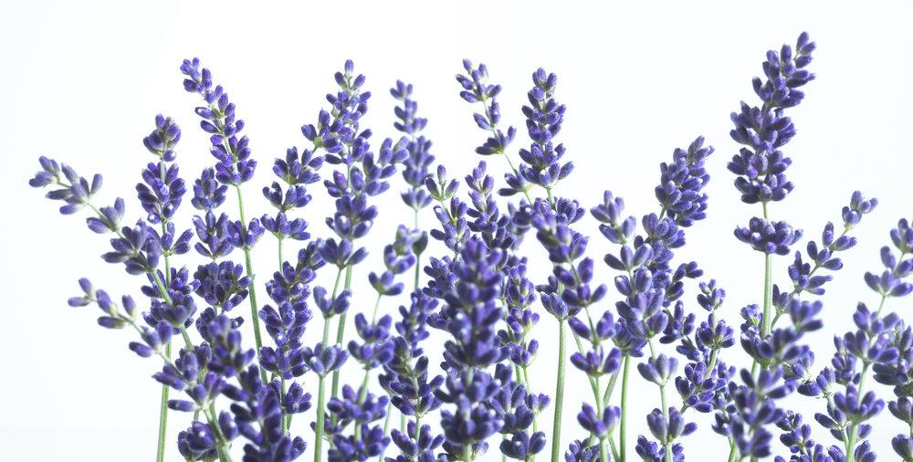 lavendar-02.jpg