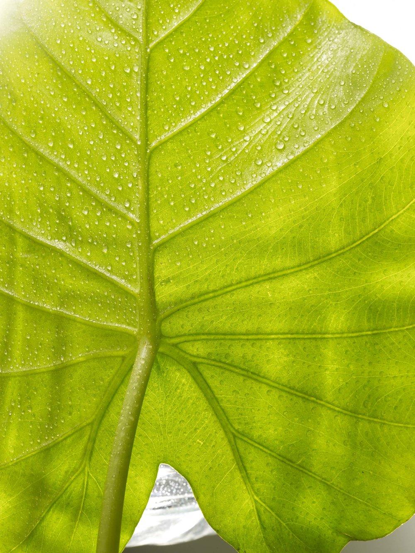 Rainforest-15.jpg
