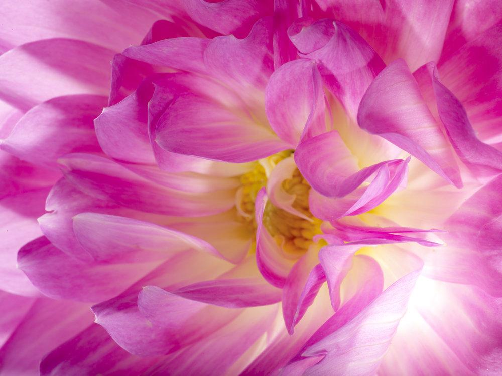 Heavenly_Flowers 1.jpg
