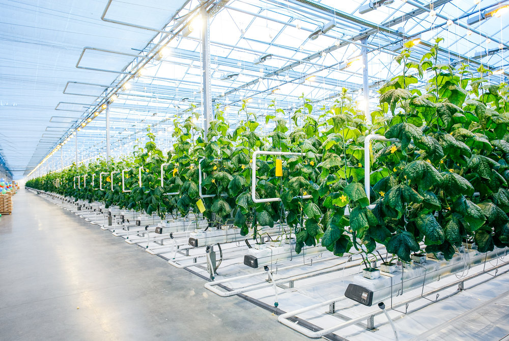 Farming - We're well acquainted with the indoor farming industry, with particular focus on starter plants and seed development. We can design fertigation and irrigation systems that carefully measure, mix, and introduce nutrients to the plant. As experts of the entire plant lifecycle, we can help you maximize results before transplanting the organism to the ground or to the marketplace.