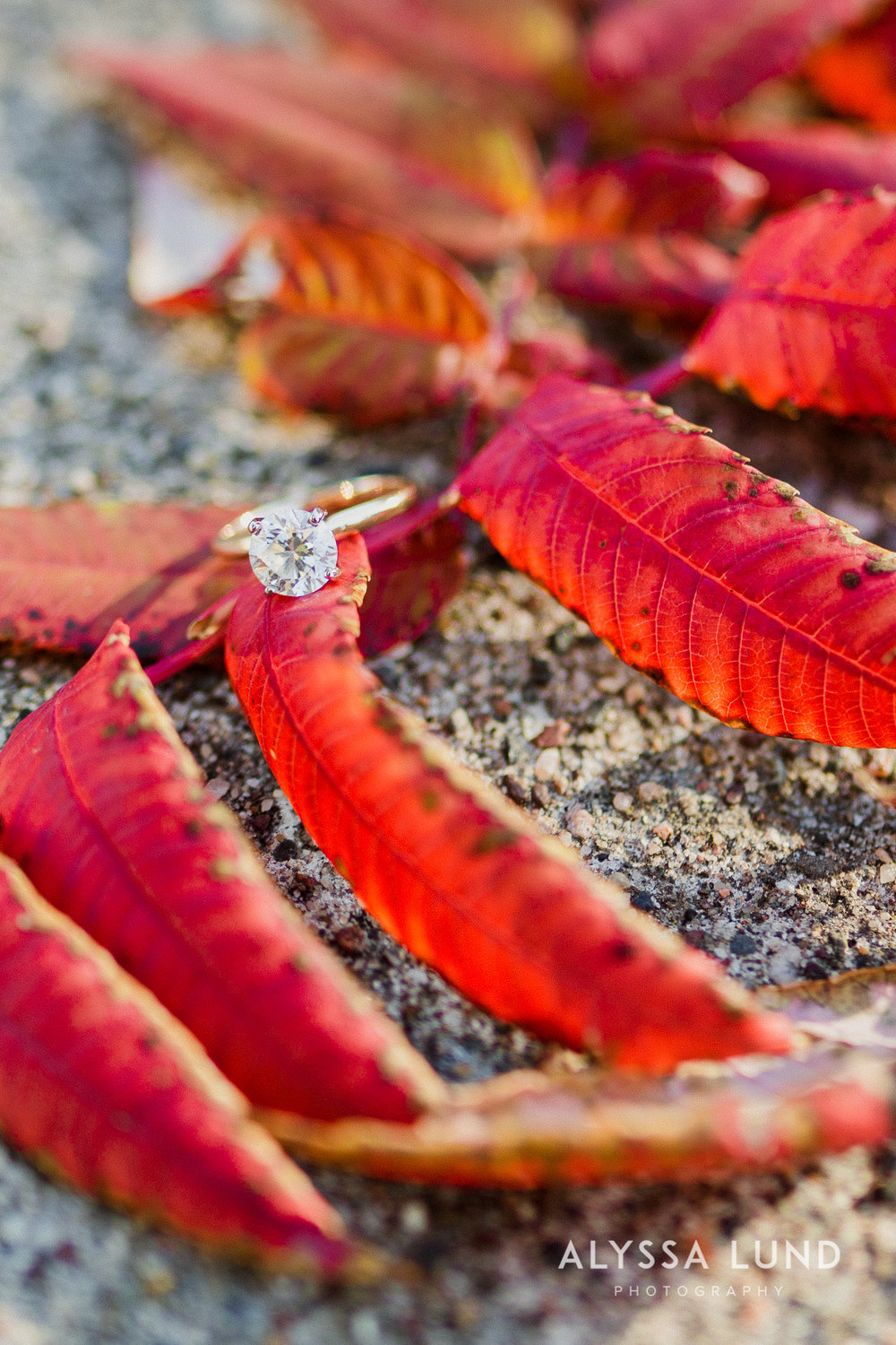 St. Paul Engagement Session at Raspberry Island-01.jpg