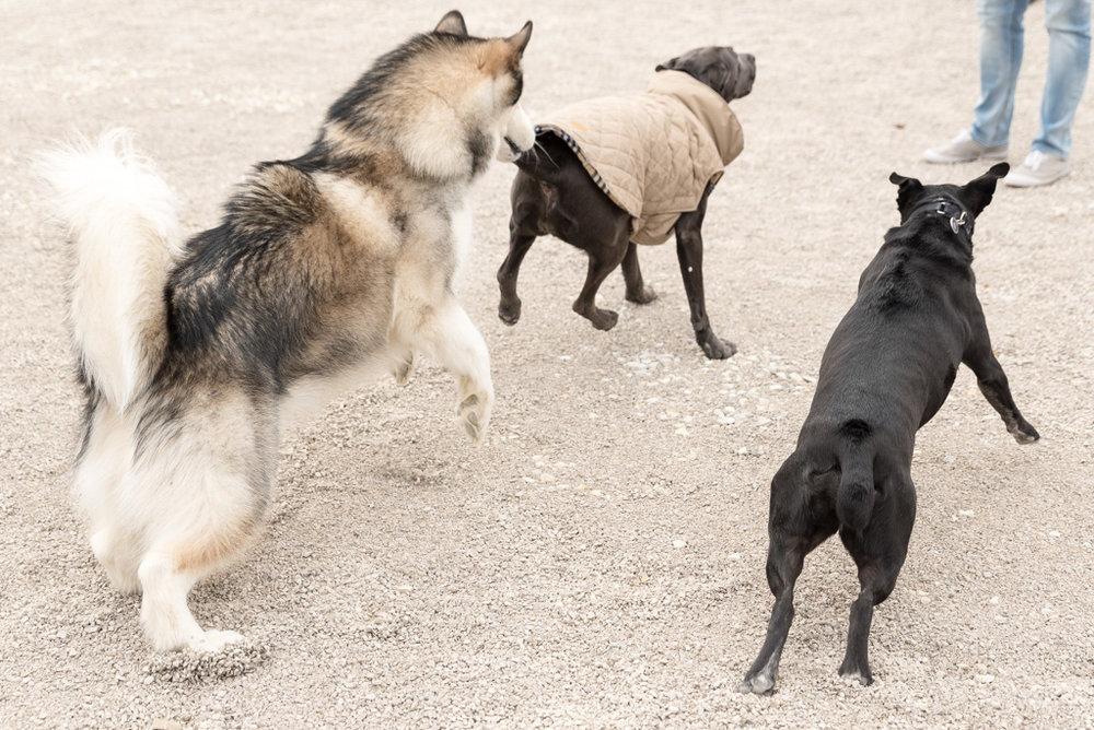 Duryea_Dog_Park_08_Web.jpg