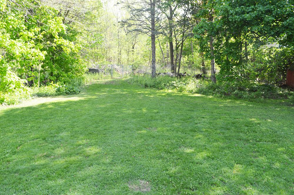 back yard open.jpg