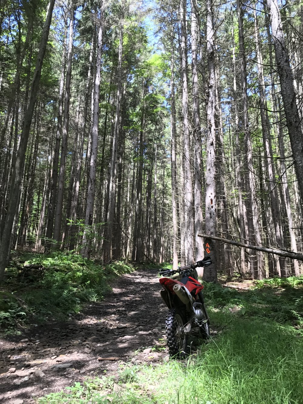 Endless wooded trails!