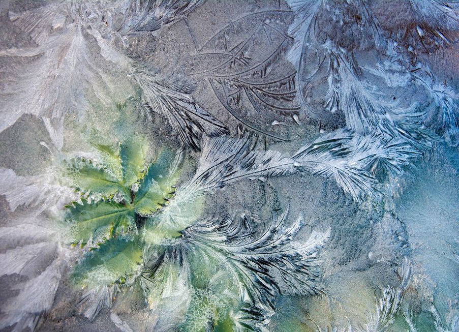 'Through Icy Glass' (Photo: Carol Casselden /IGPOTY)