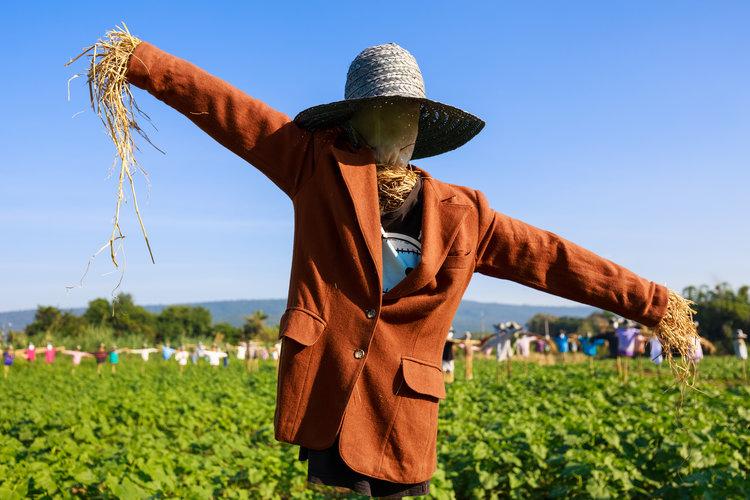 How To Build A Garden Scarecrow Kids Gardening