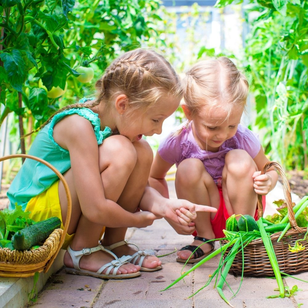 Kids Garden - How to Grow Guides