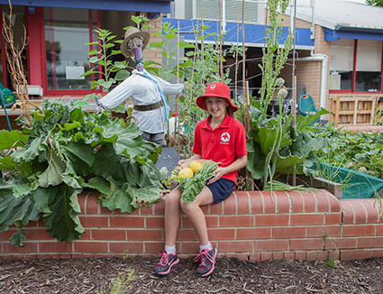 Monash Primary School - Strawberry Garden