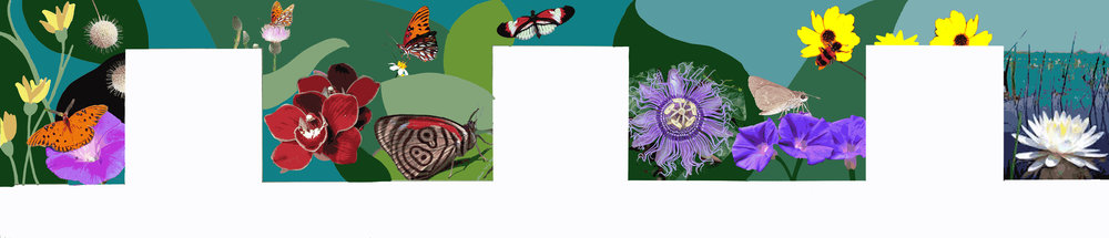 Design proposal for Chashama & Durst Foundation Mural  based on the Florida Everglades flora and fauna  Chosen for mural in long hallway inside Times Square building  2018