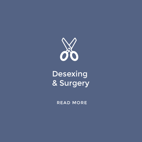 Desexing & Surgery    Read More