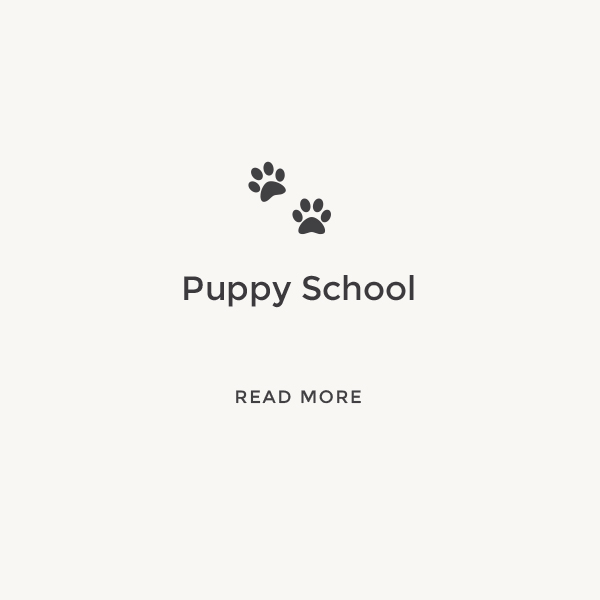 Puppy School    Read More