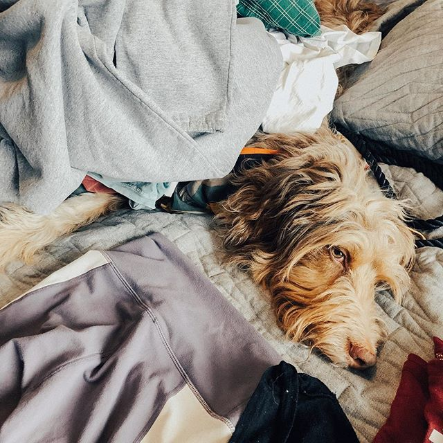 🐾 Piles of warm laundry are my favorite! #PixelPup