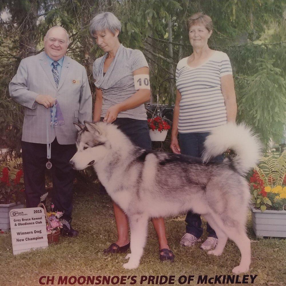 Kaiju   CH.   Moonsnoe's Pride Of McKinley