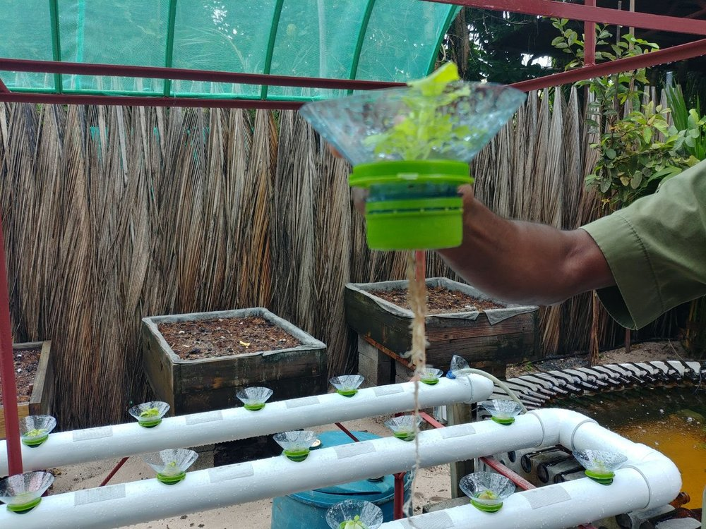 One of their project to grow cabbage on-site with a recyclable water system for the plants