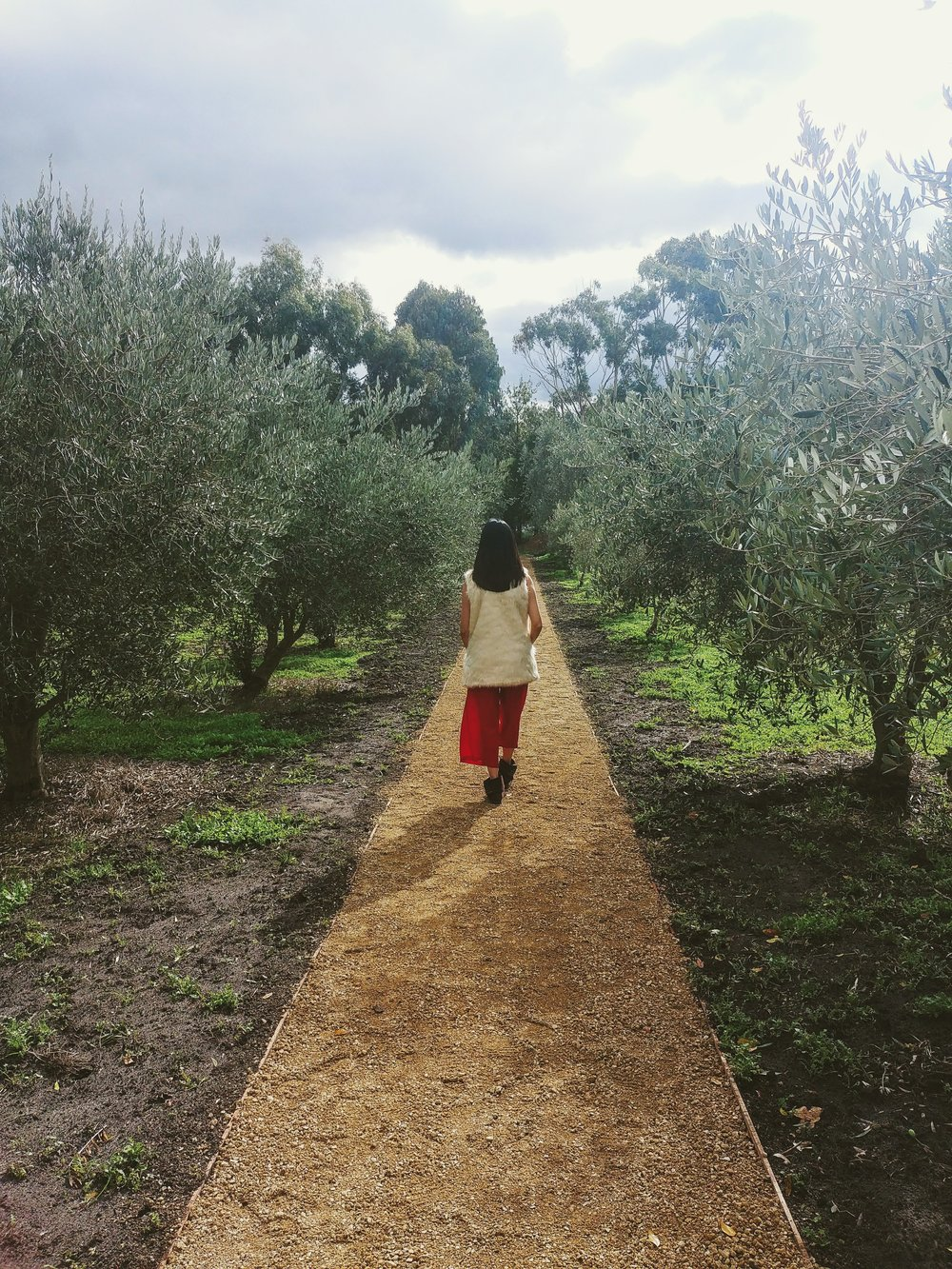 Arrived early so why not take a stroll along the line of olive trees