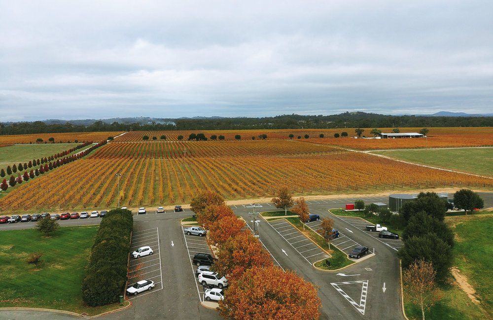 The view of the vineyard from the top of the tower