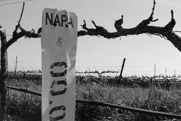 Herencia Del Valle Wines Napa Valley Vineyards
