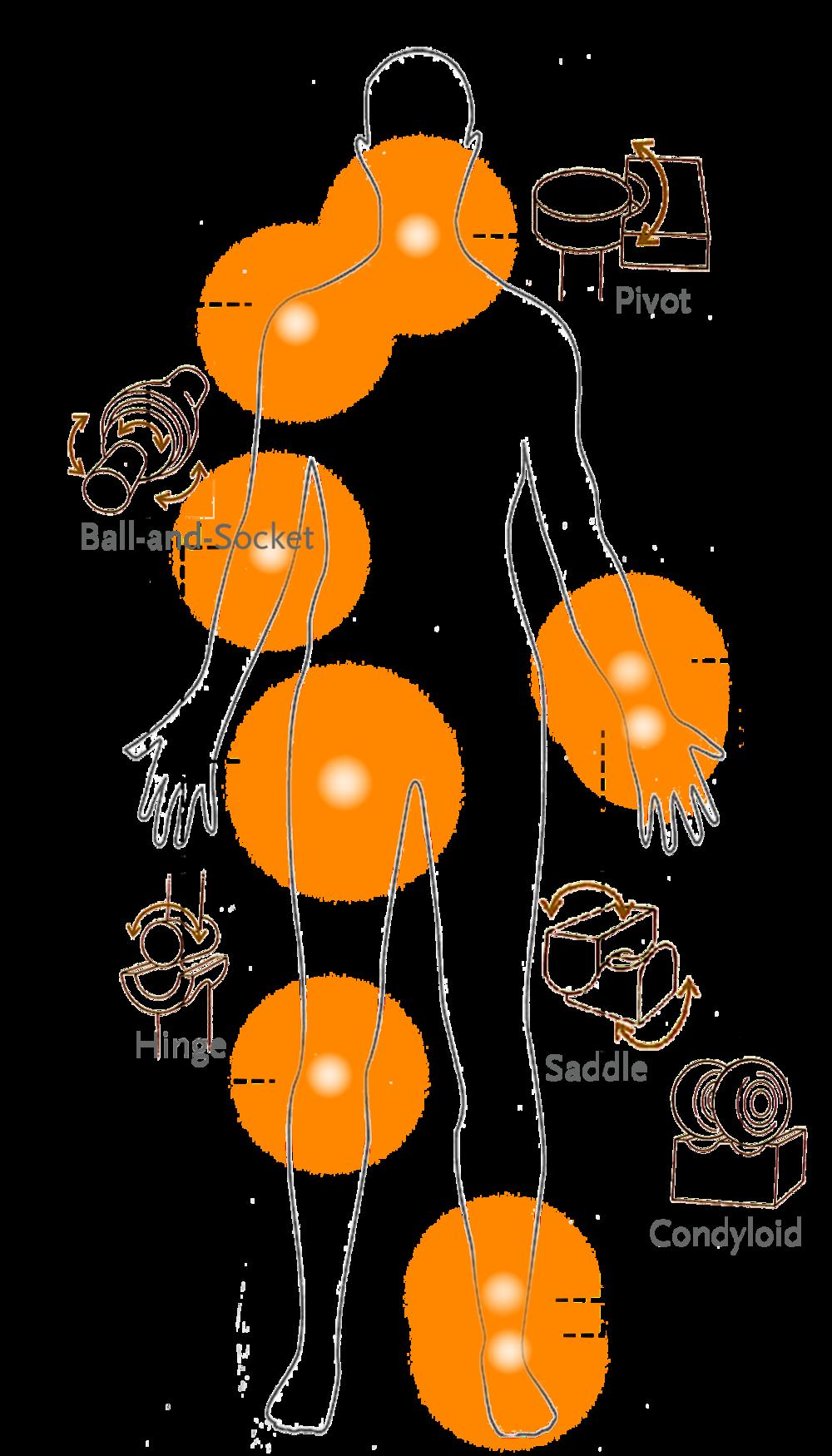 Hybrid Skins Extraterrestrial Interventions Karen Asmar Saddle Joint Diagram Study Of Body Articulations