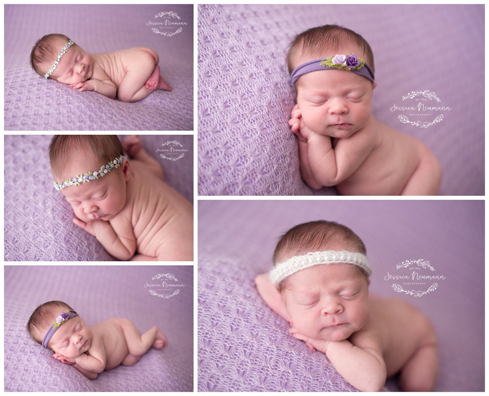 posed newborn on purple
