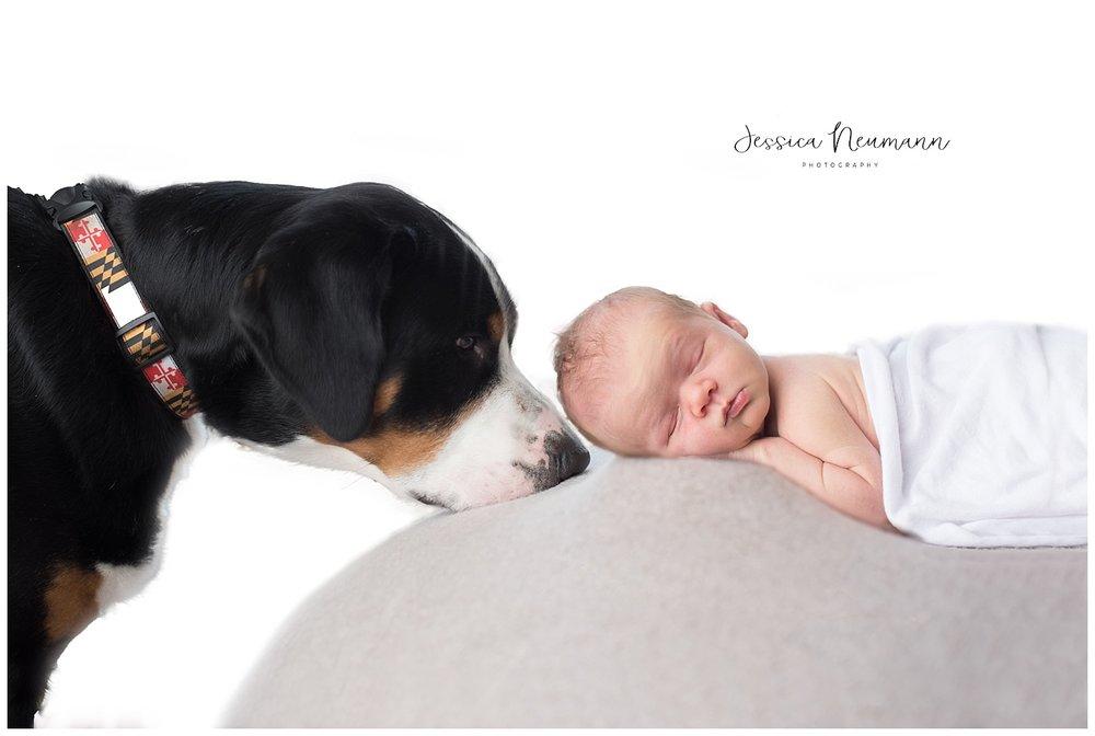 newborn baby with large dog