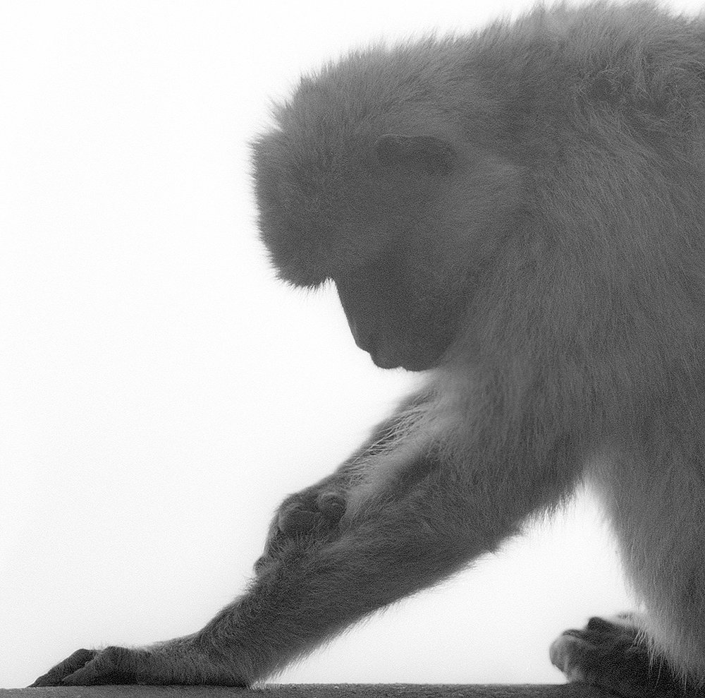 apes2_retro.jpg