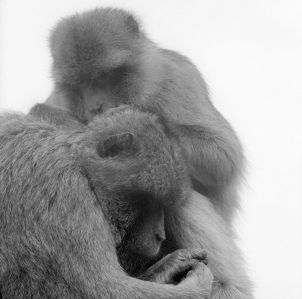 apes1_retro.jpg