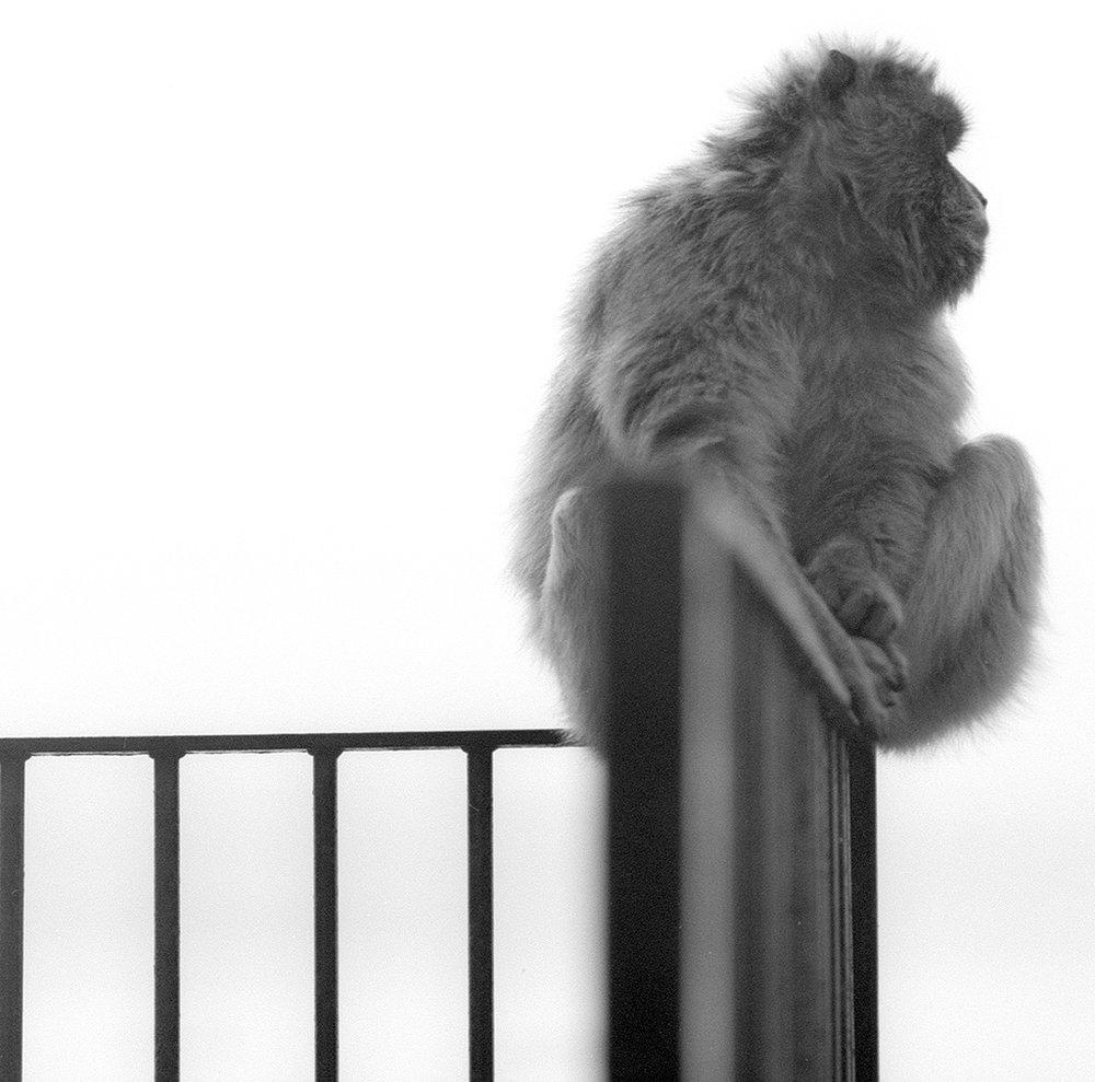 apes15_retro.jpg