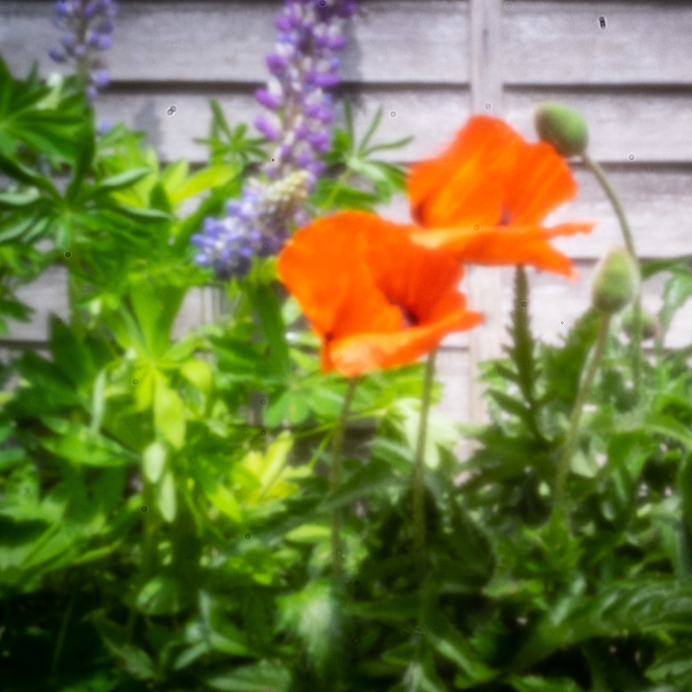 Garden Flowers 0.2mm Pinhole