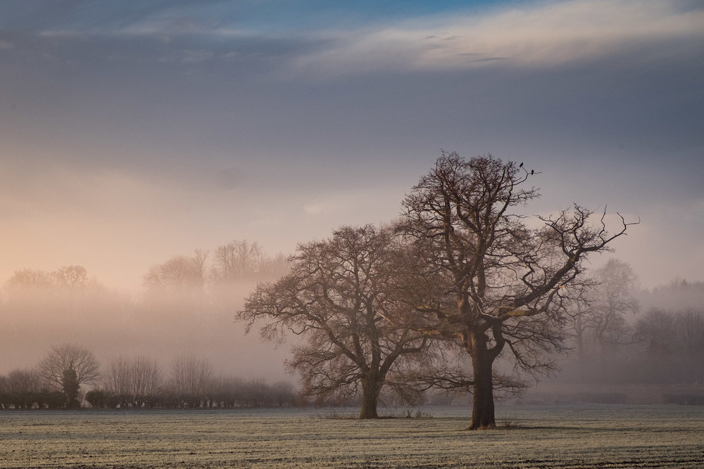 Winter Trees - Chevening