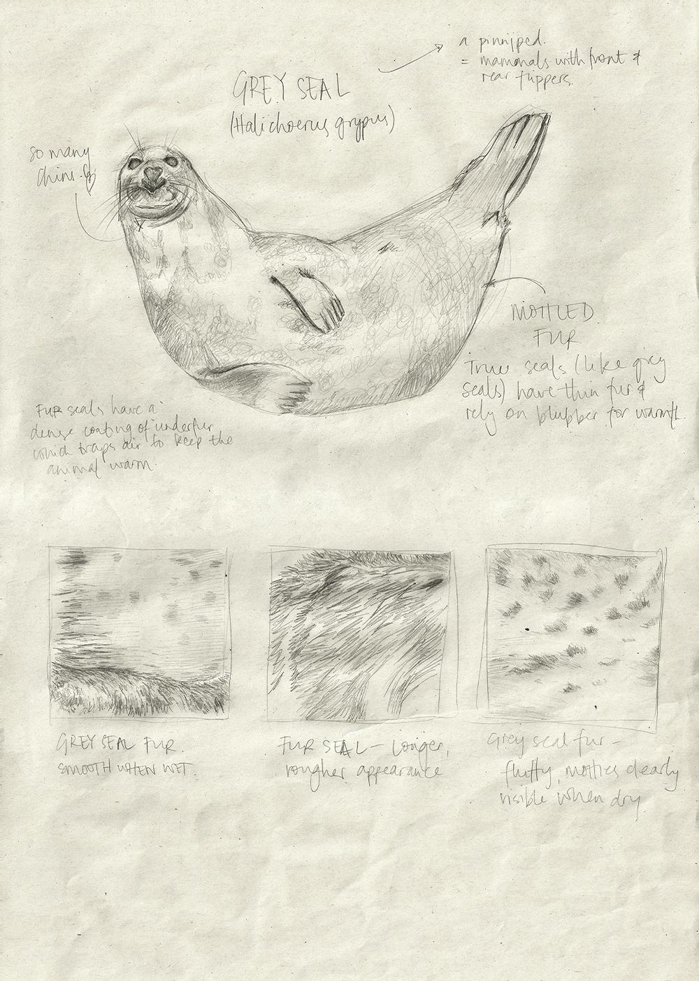 008-SealFur.jpg