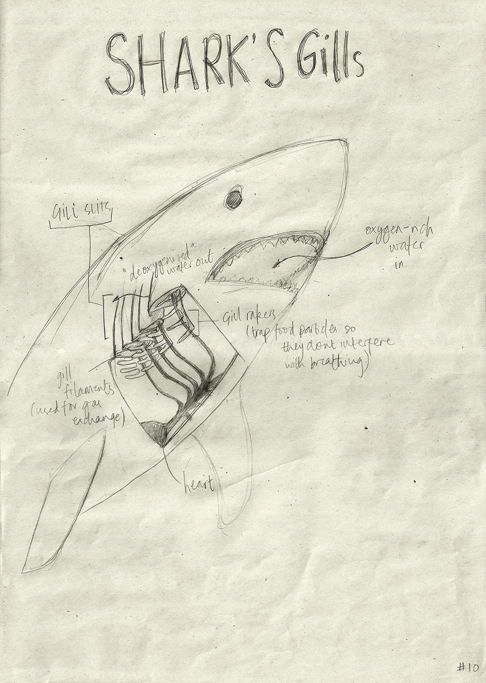 010-SharkGills.jpg