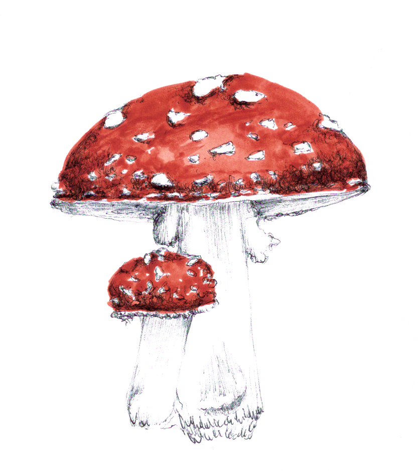 Toadstool-02 copy.png