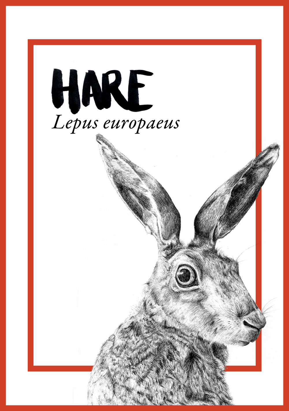 JC-CommissionsTableAnimals-hare.jpg