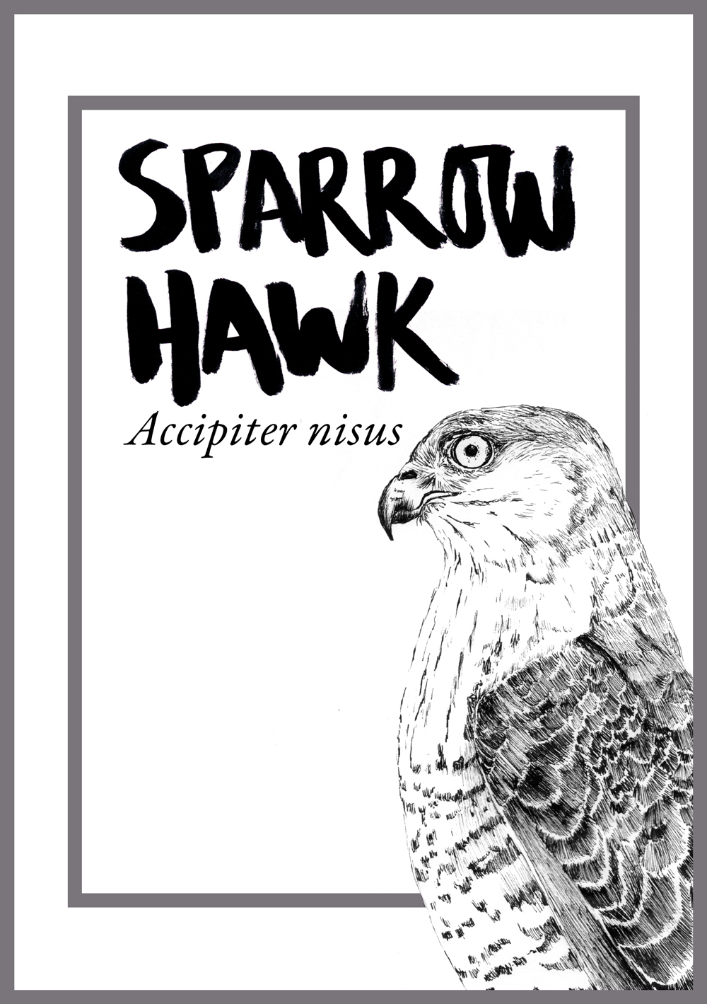 JC-CommissionsTableAnimals-sparrowhawk.jpg