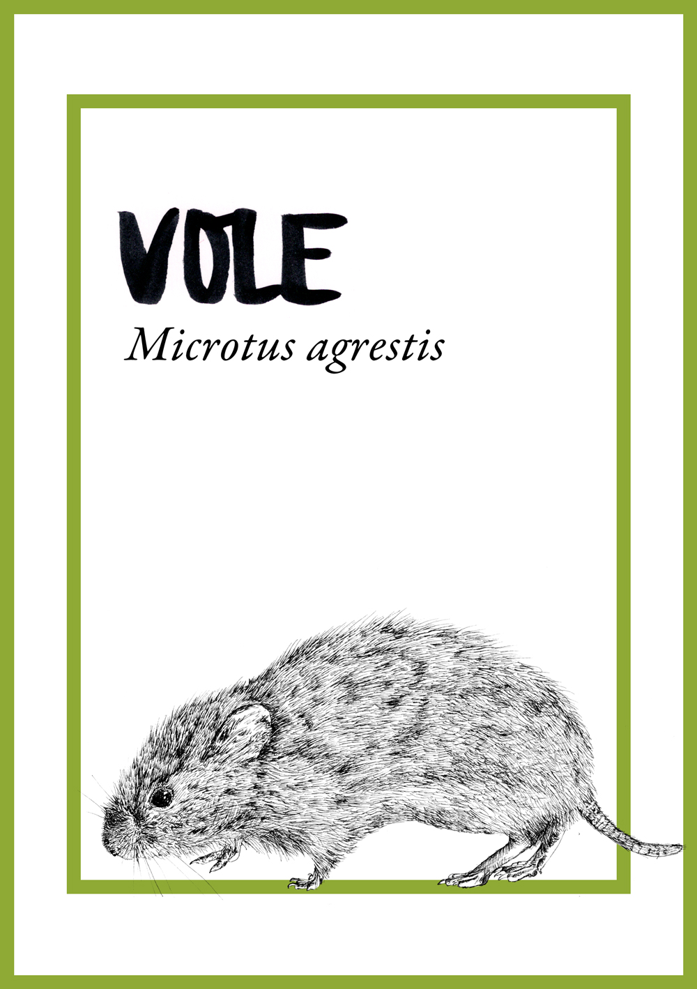 JC-CommissionsTableAnimals-vole.jpg