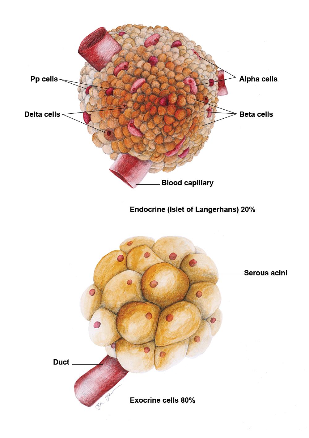 JC-ColoradoBookChapter-Histology.jpg