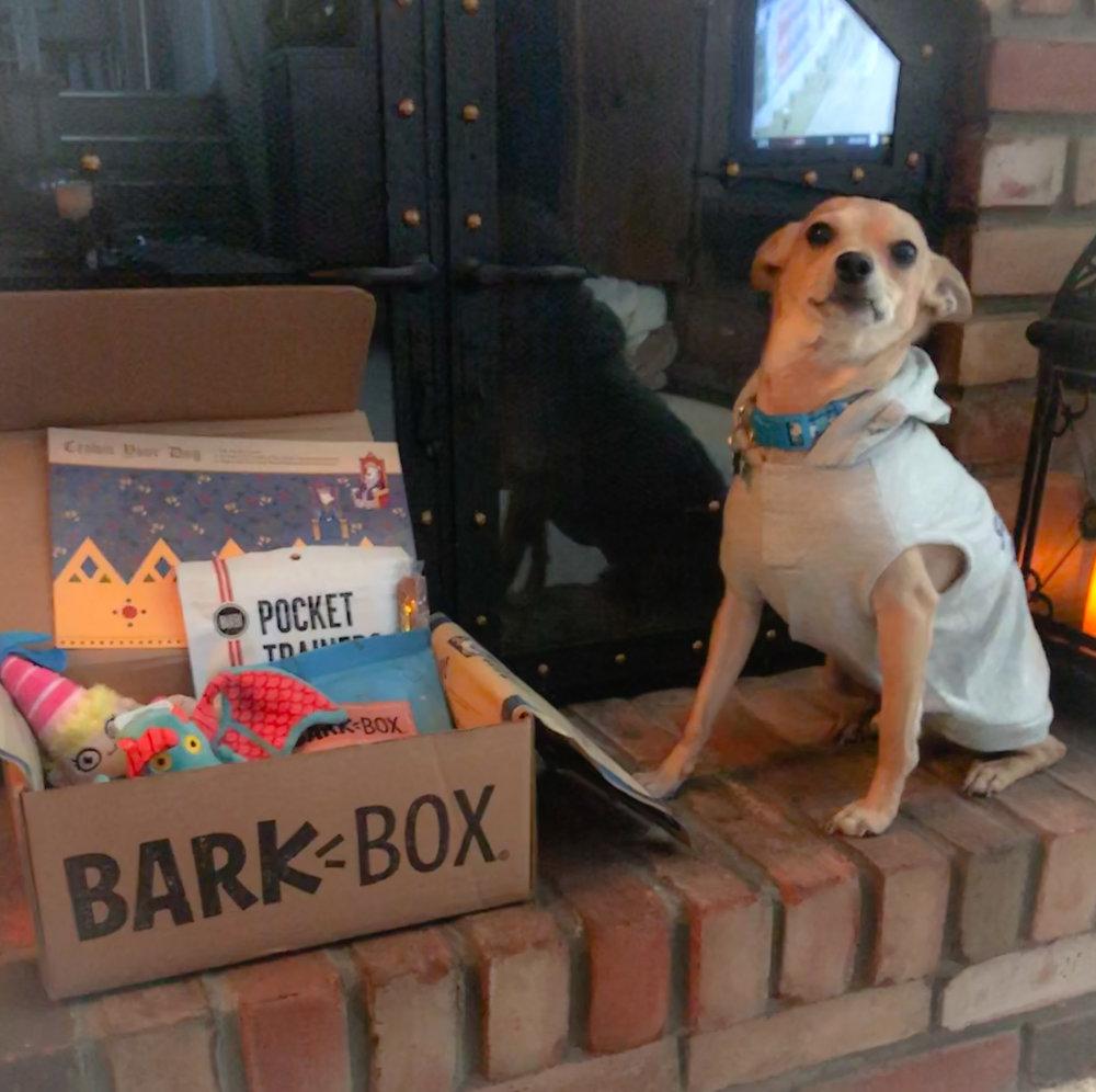 Cooper loves his BarkBox!