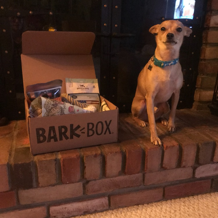 Cooper and his first Barkbox