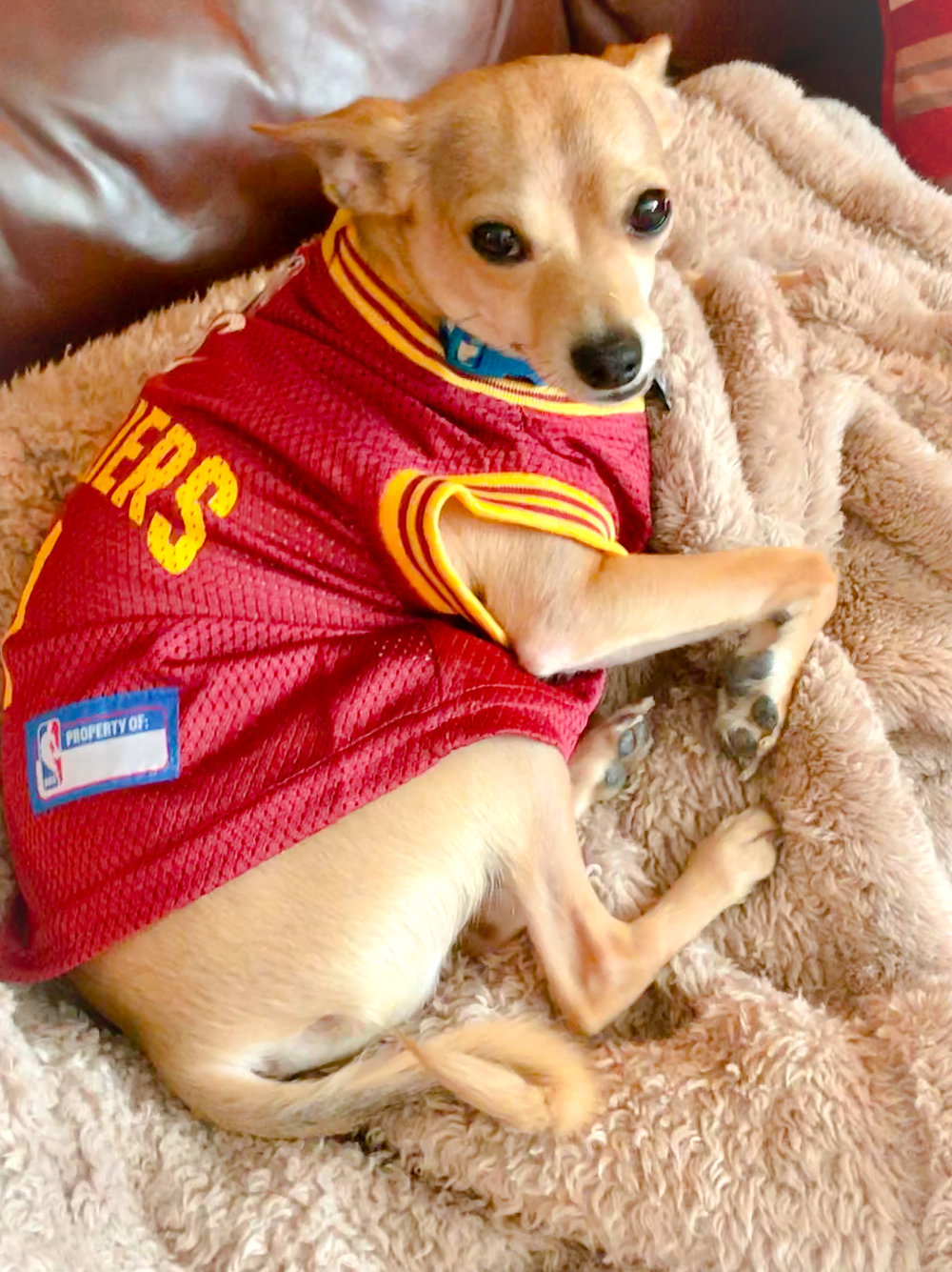 Cooper is relaxing and watching the Cavs game in his jersey!