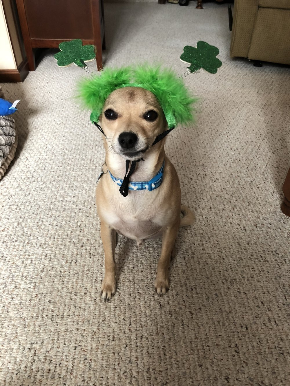 Cooper is all ready for St. Patrick's Day!  Be sure to check out what he purchased below!
