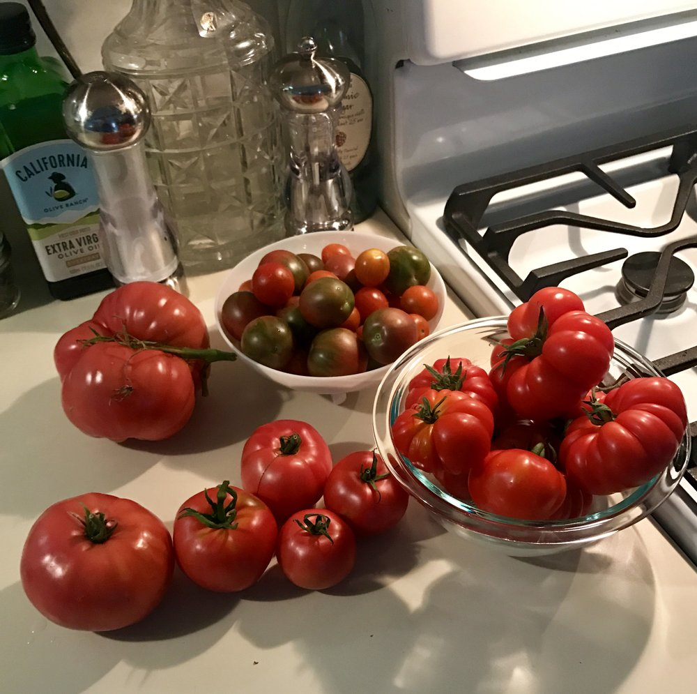 This was a normal tomato harvest during August and September with Laurel's plants.  As you can see, my garden is not that big in square feet, but that's a ton of daily tomatoes for that space!