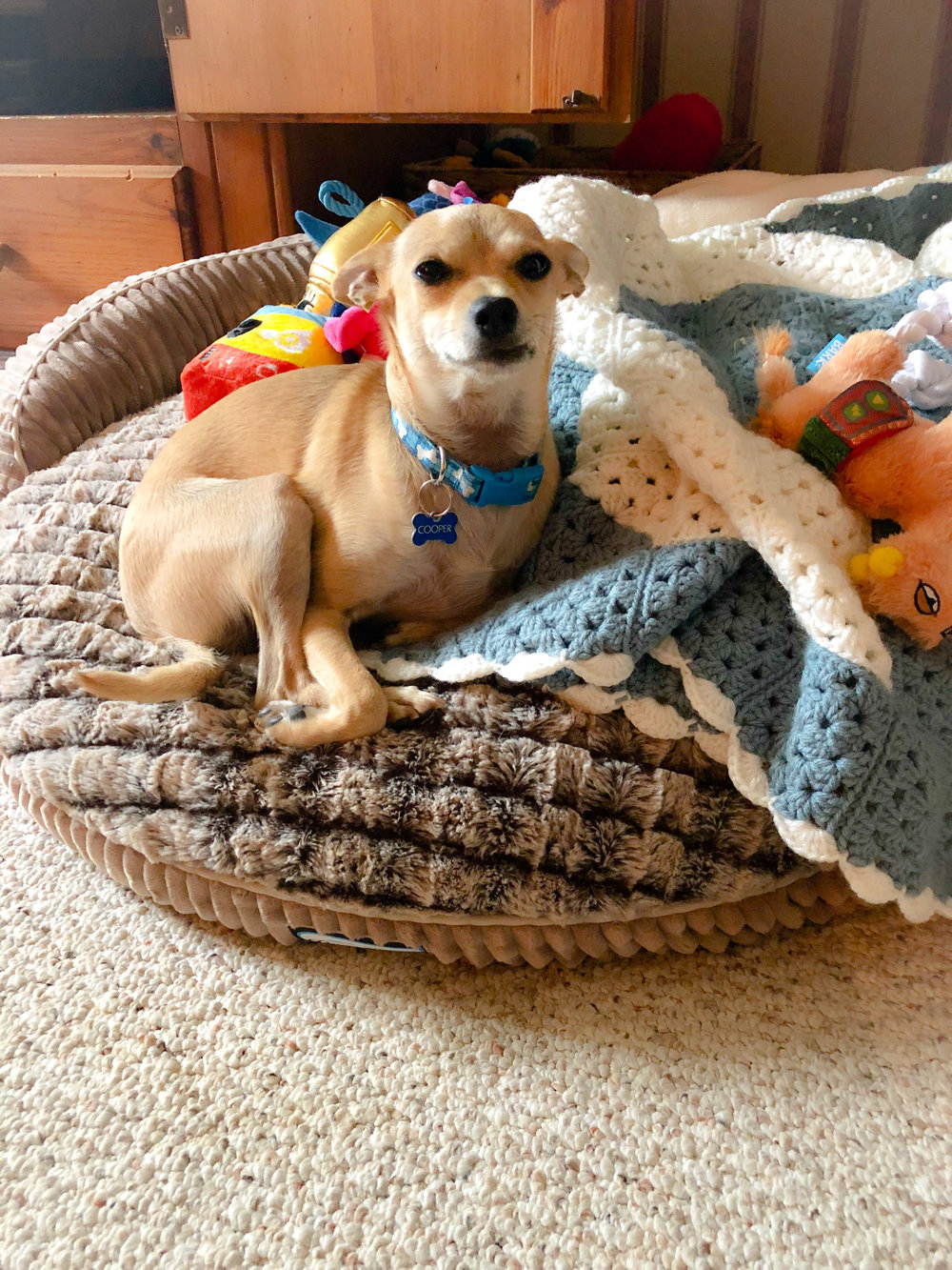Cooper loves his Beautyrest dog bed! Although this is an older model, there are so many cute ones out there that are great for dog muscles and bones or those who need a comfortable bed to rest their little bodies! I've linked up some super cute ones from Amazon!