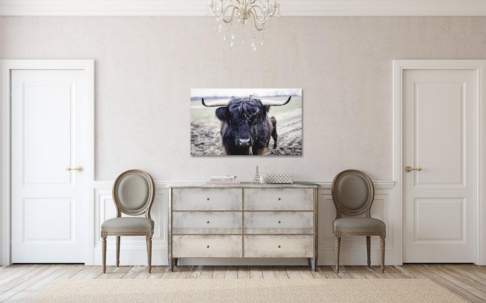 hallway_highland_cow.jpg