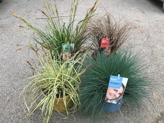 1. Carex 'Everlime', 2. Carex 'Bronze Form', 3. Carex 'Evergold' (sás fajták),   4. Festuca 'Intense Blue' (fényperje)