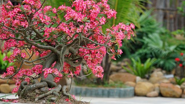 flower-3364692_640.jpg