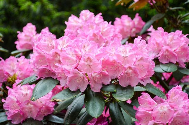 flower-3359076_640.jpg