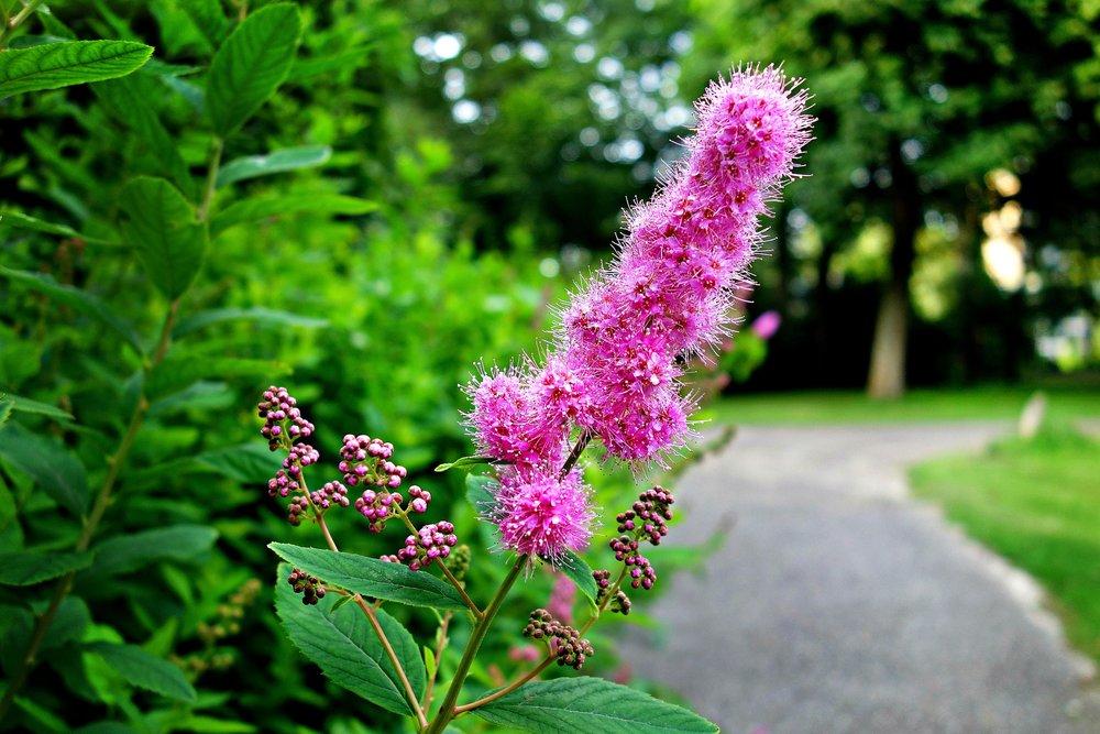 flower-3000868_1920.jpg