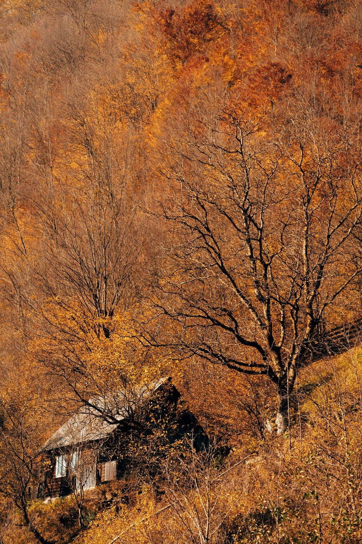 cabin in bright trees.jpg