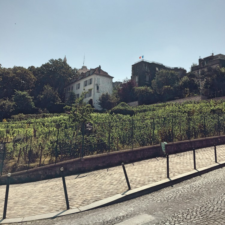 Things to do in montmartre Vidi Guides vineyard