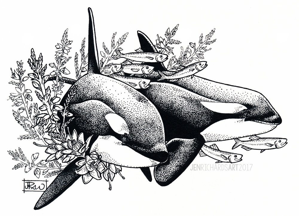 Orcas of Norway, 2017